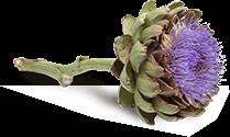 Schossberghof Blume