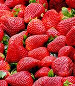 Schossberghof-Teaser-Erdbeeren2018